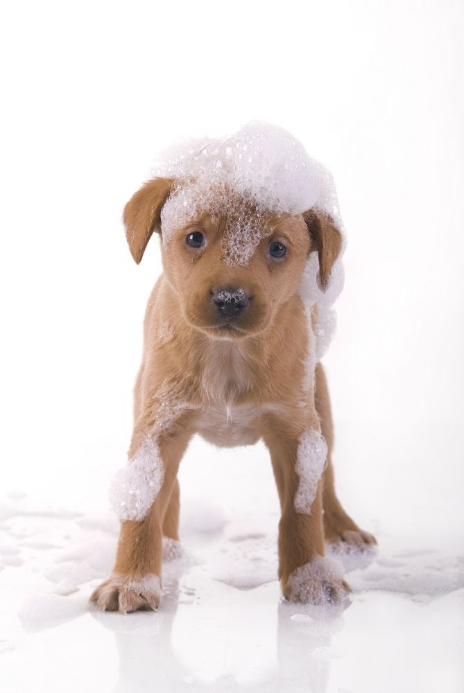 bathe your pets regularly